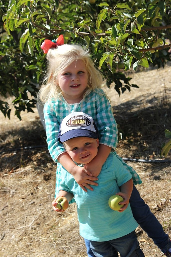 Apple Picking in Petaluma